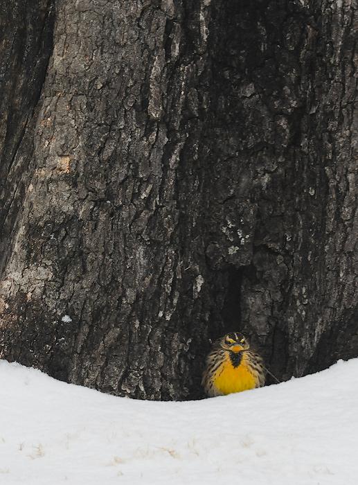 Seeking-shelter